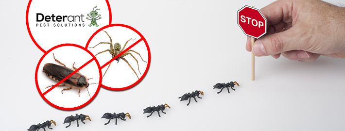 How Often Should You Get Your House Serviced for Pest Control?