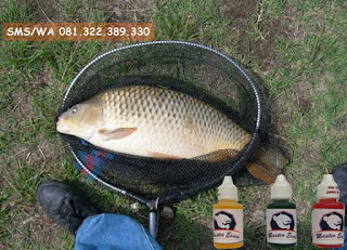 Essen Ikan Mas Subang Khusus Babon