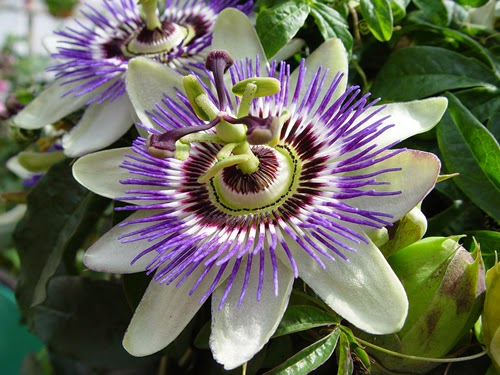 Top 10 most beautiful flowers in the world