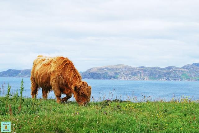 Alrededores de Glengorm Castle, isla de Mull