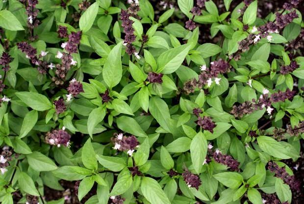 kelulut,stingless bee,bunga.pokok bunga,madu,bunga yang disukai kelulut,