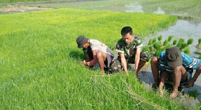 Babinsa Ceper Dampingi Petani Siapkan Bibit Padi