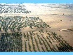 Projet, écologique, grande, muraille, verte, désertification, pauvreté, dégradation, changement, climatique, pépinières, alimentation, jardins, polyvalents, sahélo, saharienne, LEUKSENEGAL, Dakar, Sénégal, Afrique
