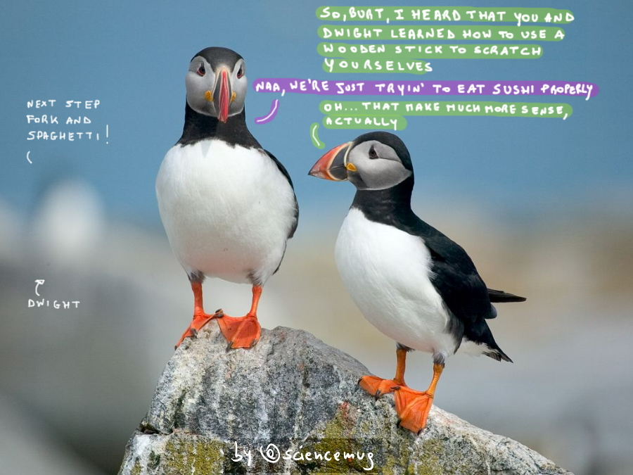 Two Atlantic Puffins discussing about the true reason why seabirds evolved the ability to use tools (by @sciencemug)