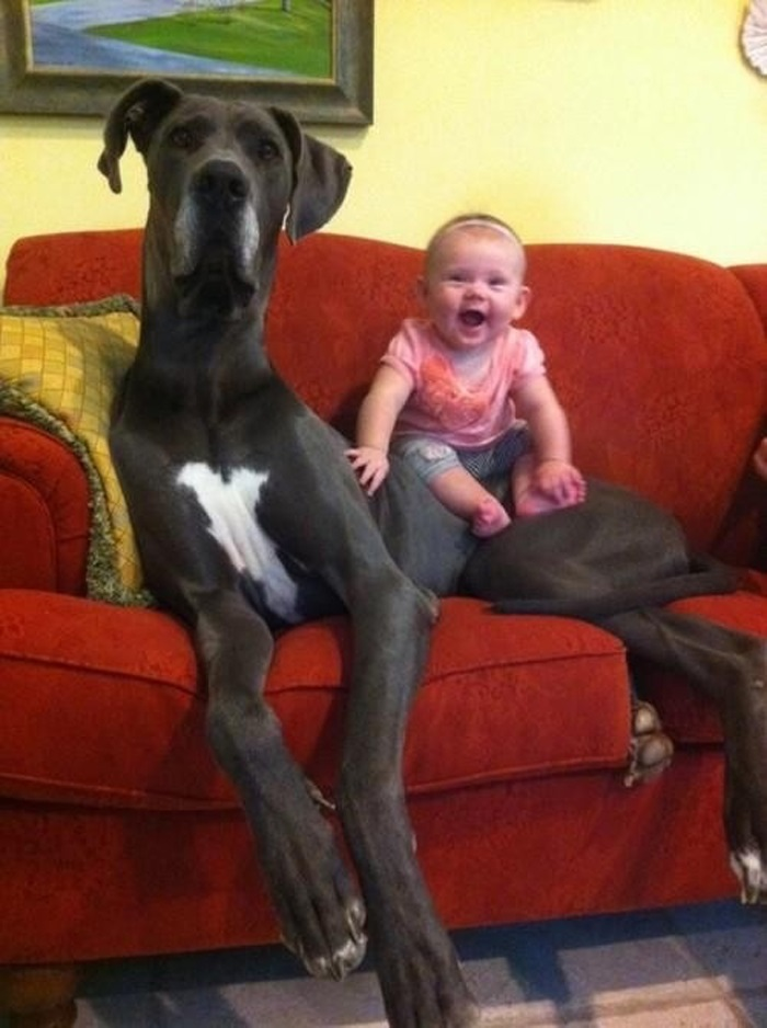 funny gigantic dogs