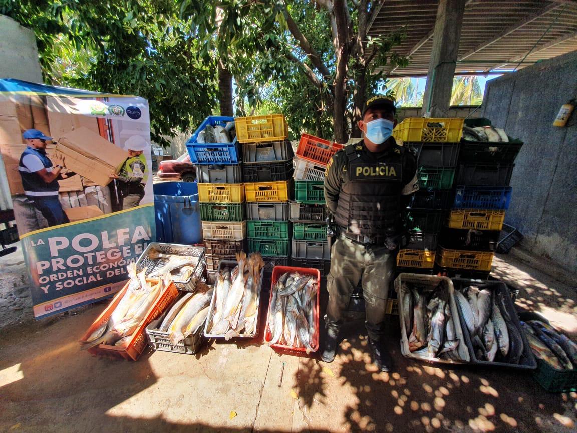 Polfa decomisa en Maicao 2.848 kilos de pescado por más de 28 millones de pesos
