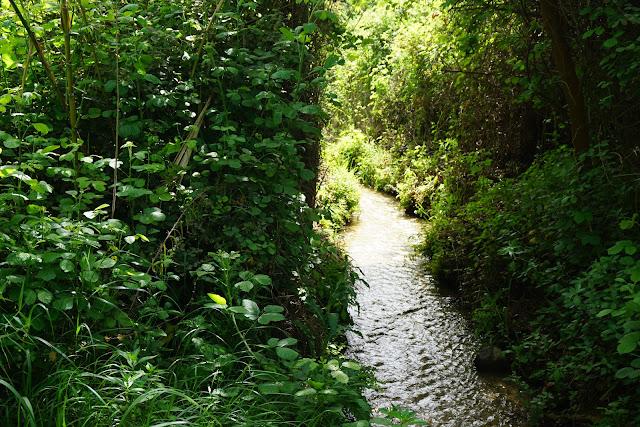 מסלול מים