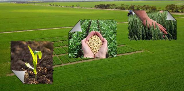 Mereka melakukan penelitian agronomi dalam rotasi tanaman, irigasi & drainase, pemuliaan tanaman, klasifikasi tanah yang cocok atau dimaksud pemilihan tanah, kesuburan tanah, serta apa dan bagaimana cara pengendalian gulma, dan area lainnya yang masih berhubungan dengan ilmu agronomi.