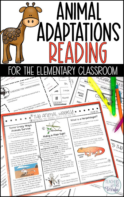 A reading unit for Animal Adaptations. It includes 4 selections at two different elementary levels with reading comprehension skill-based questions. Also includes a newspaper mock-up about animals with 3 graphic organizers provided. All answer keys are included! Easy-peasy- Just Print and Read! #animaladaptations #Readingsheets