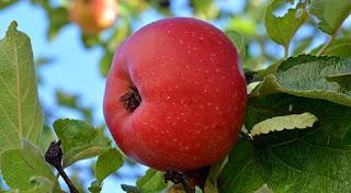 فوائد التفاح الصحية المذهلة ستجبرك على تناول التفاح!