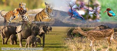 indian natioal parks, bharat ke abhyaran, bharat ke national parks, bhartiy vany jeev abhyaran,