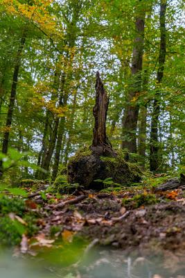 Wildwiesenweg – Eitorf | Wandern in der Naturregion-Sieg | Erlebniswege Sieg 09