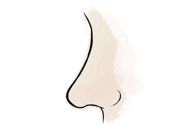 Cùng xem vận mệnh của bạn qua những tướng mũi dưới đây: mũi tròn