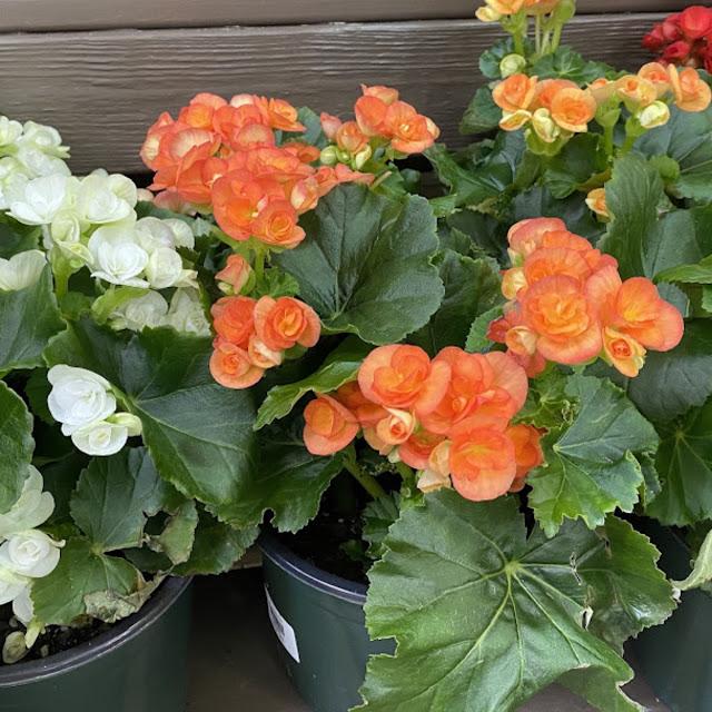 garden center flowers