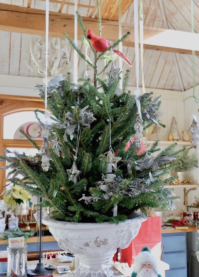 A large white French-style urn holds this year's table top Christmas tree decorated with glittering bird's nests.