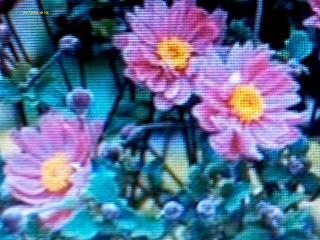 http://larbredevie.blogspot.com