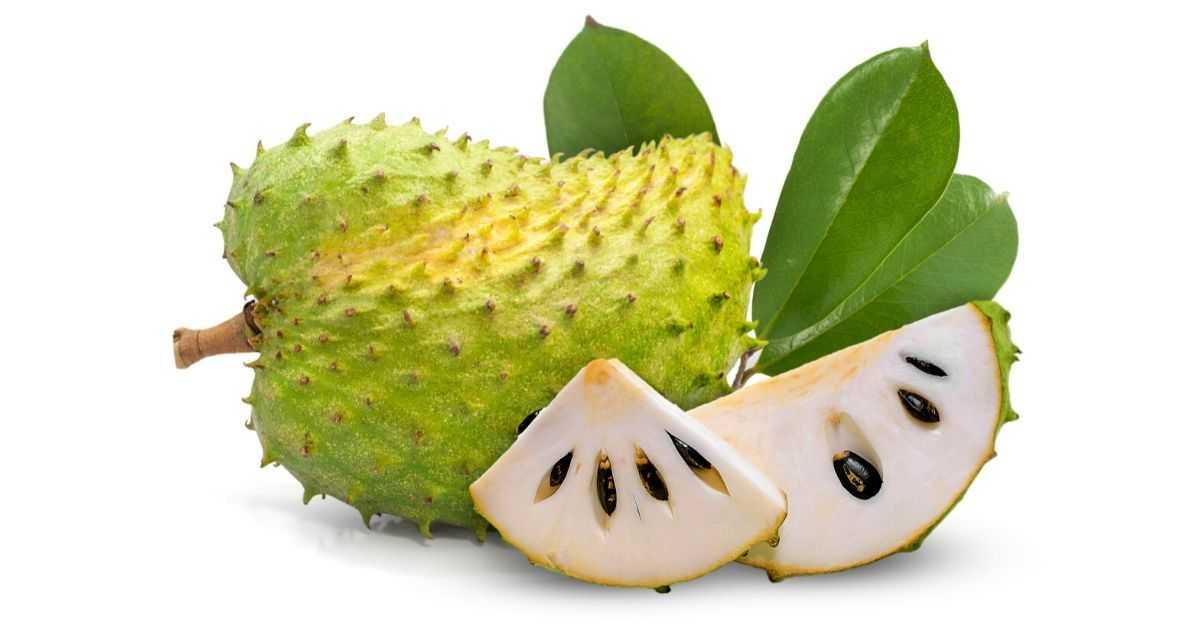 khasiat daun durian belanda