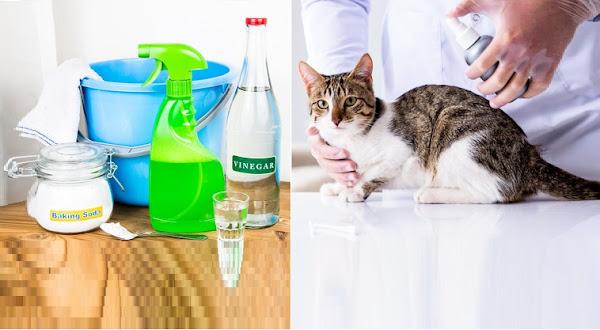 علاج  البراغيث في الكلاب والجراء والقطط