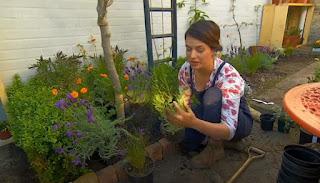 Frances Tophill growing Tarragon