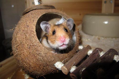 hamsterkooi hamster