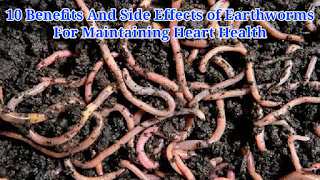 10 Benefits And Side Effects of Earthworms for Maintaining Heart Health