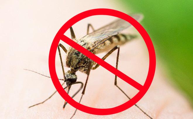 Cách chống muỗi