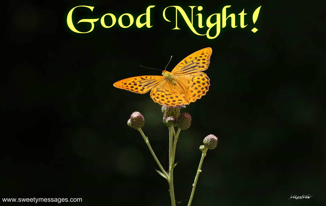 Good Night Messages and Pictures - Beautiful Messages