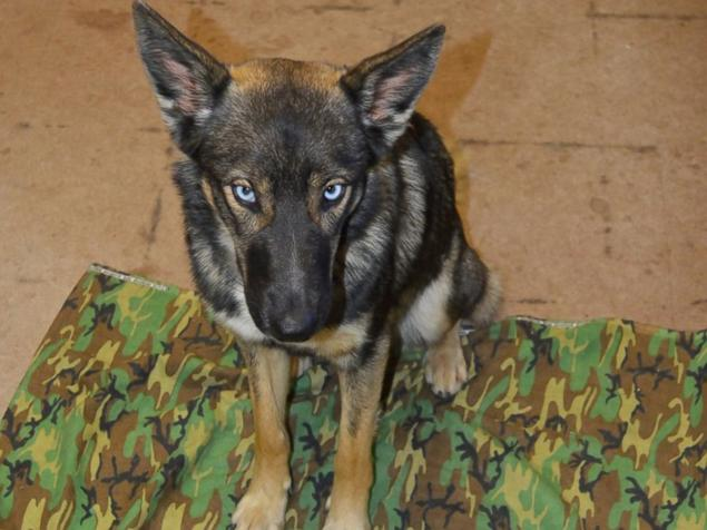 German Shepherd Found Alive After Being Lost At Sea For 5 Weeks