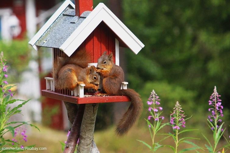 Eichhörnchen Futterhaus in Schwedenrot