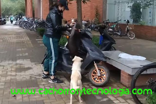 cachorro puppy dog adoptado despedida shurkonrad cachorros y tecnologia 4