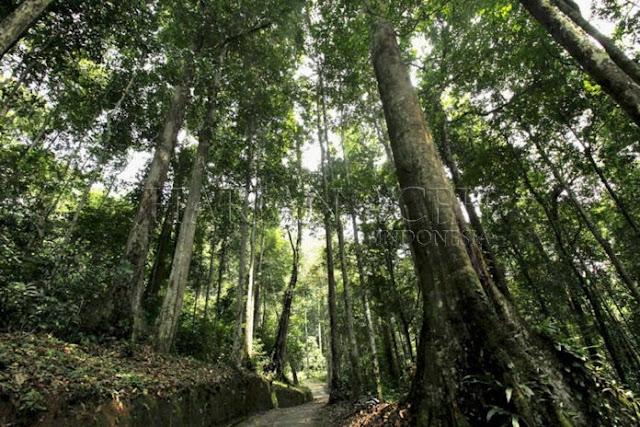 hutan Leuser Aceh tenggara