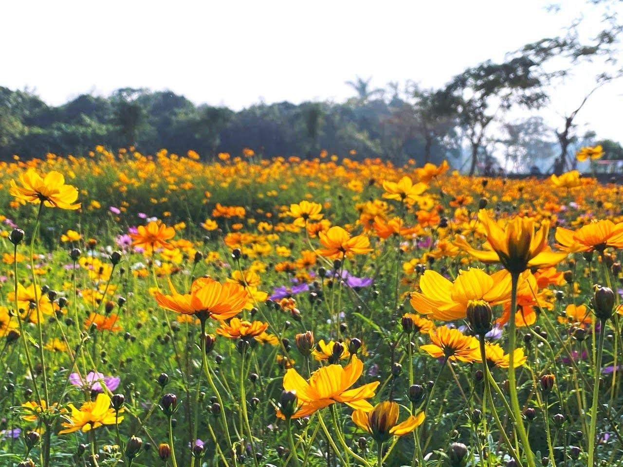 山上花園水道博物館遍地開花|年節離開人群市區賞花趣