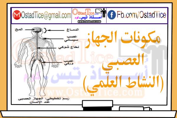 درس مكونات الجهاز العصبي النشاط العلمي المستوى السادس