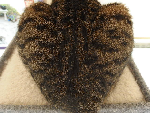 Spot cat's back view in the shape of a heart