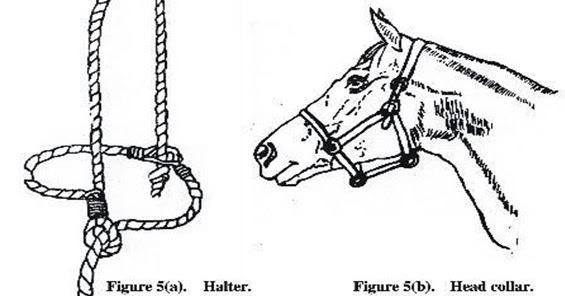 HANDLING AND RESTRAINING ANIMALS ~ Vets Solution