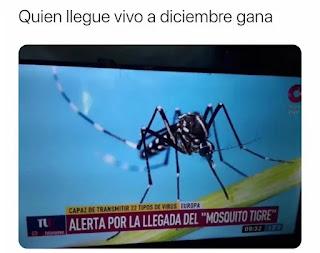 Foto de mosquito tigre