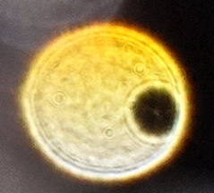 yellow orb with hole