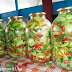 Маринованные зеленые помидоры «Адские» .