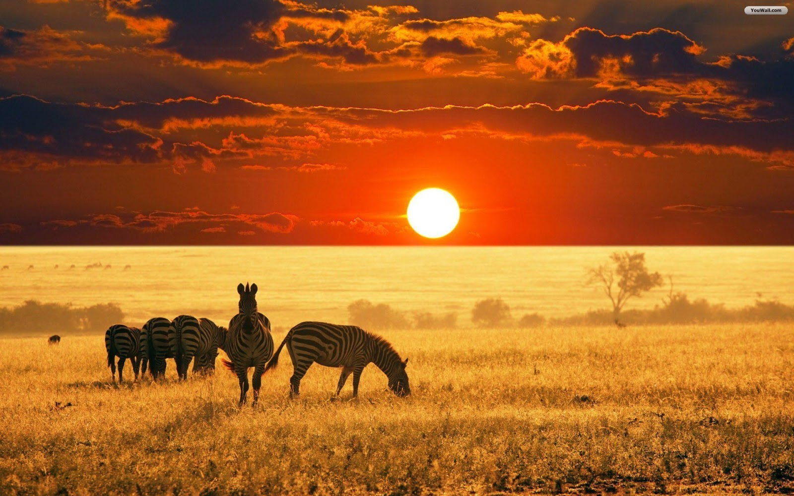 african wallpapers Nature HD Wallpapers
