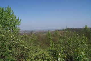 Die Aussicht von der Glessener Höhe. Im Vordergrund sind Büsche zu erkennen.