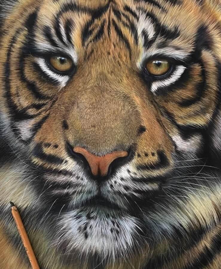 06-Tiger-Paul-Miller-www-designstack-co