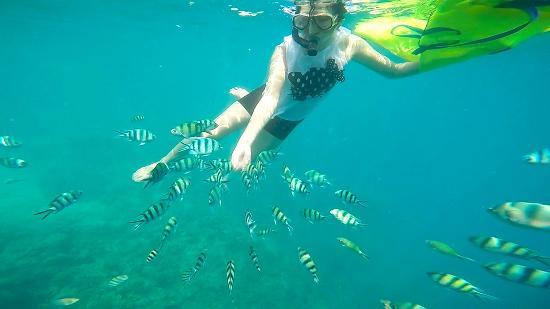 Snorkeling-pulau-pramuka,