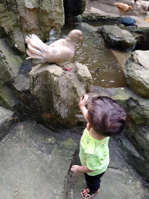 anak kecil tengok burung dalam sangkar burung farm in the city petting zoo