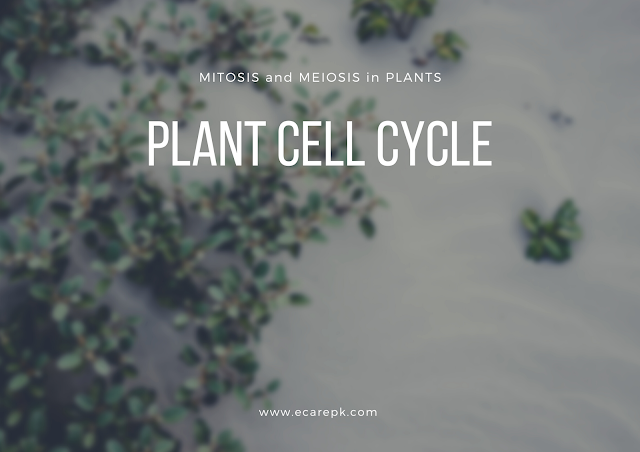 The Process of Mitosis and Meiosis in Plant Cell  // Cell Cycle in Plants