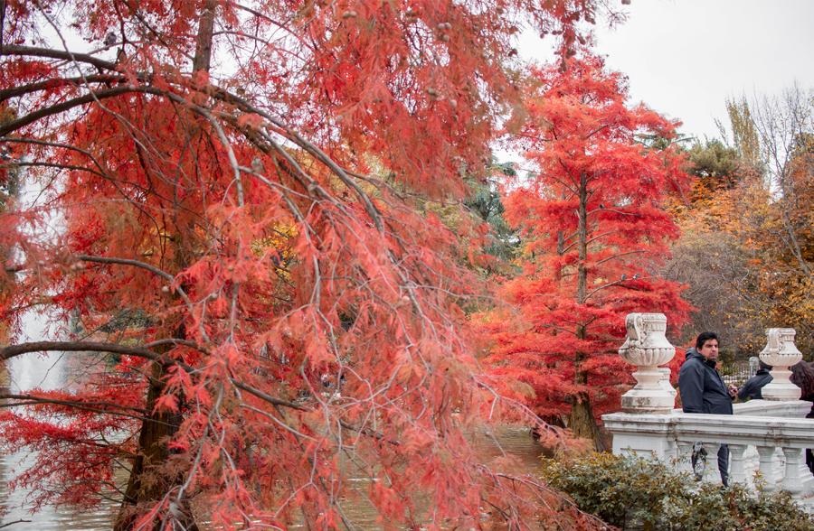 madrid parque retiro otoño