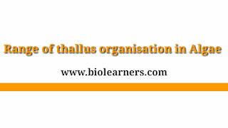 Range of thallus organisation in Algae