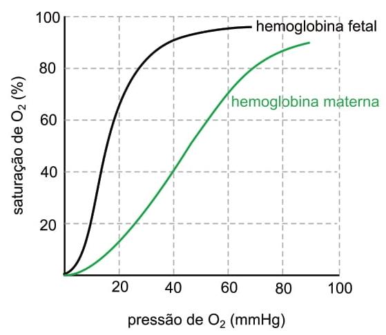 O gráfico ilustra duas curvas de saturação de oxigênio, pelas hemoglobinas fetal e materna