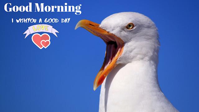 beautiful bird  Good Morning  Images.