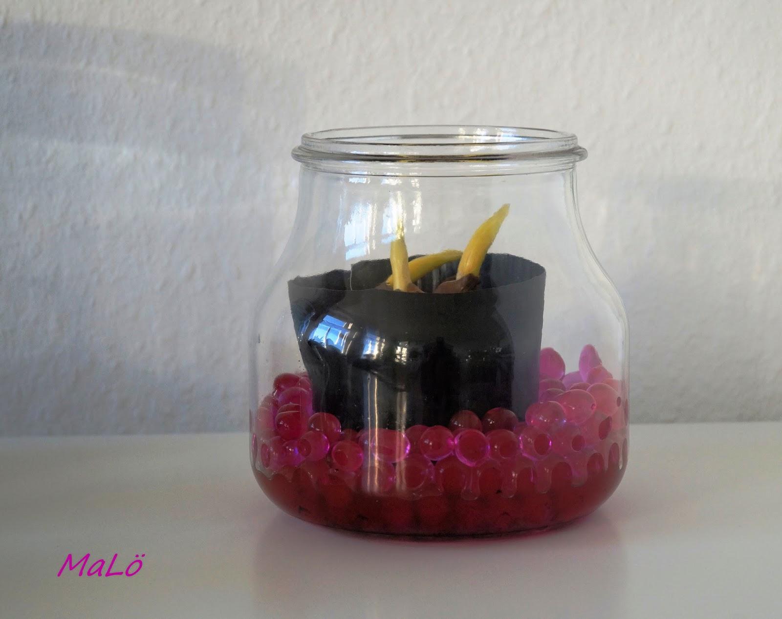 kleiner gru in den fr hling tulpen im glas. Black Bedroom Furniture Sets. Home Design Ideas
