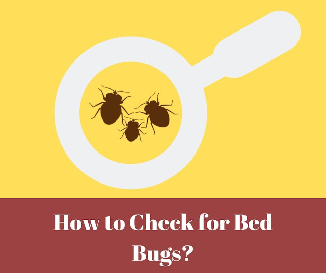 How to check for bed bugs? Bed bugs in magnifying glass.